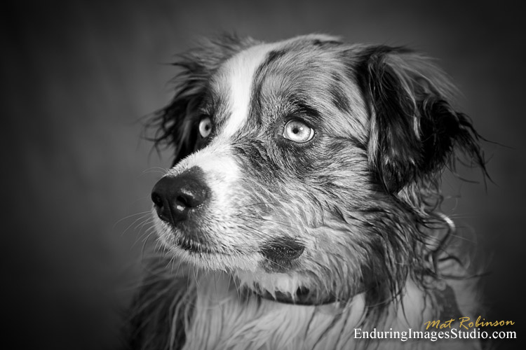 Dog portrait photographer